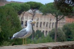 Vista dell'occhio dell'uccello s del gabbiano della città Roma Immagine Stock