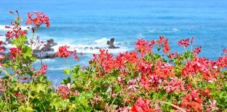 Vista dell'oceano Fotografie Stock Libere da Diritti