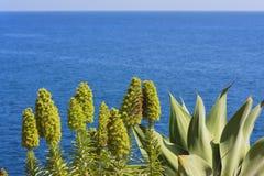 Vista dell'oceano dall'alta costa con i fiori Isola Madei Fotografie Stock