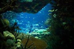Vista dell'oceano, sotto l'acqua. Fotografia Stock Libera da Diritti