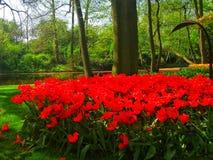 Vista dell'Olanda del parco del keukenhof fotografia stock libera da diritti
