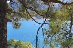 Vista della baia del mare Filiali del pino Navigazione delle barche Fotografia Stock Libera da Diritti