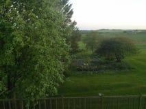 Vista della campagna con gli alberi nella sera scotland immagine stock libera da diritti