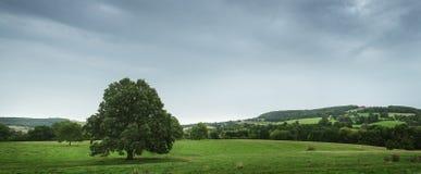 Vista della campagna, Inghilterra Fotografia Stock