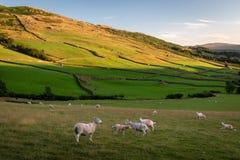 Vista della campagna rurale inglese sulla bella sera soleggiata, SH fotografia stock libera da diritti