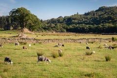 Vista della campagna rurale inglese sulla bella sera soleggiata, SH immagini stock