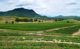 Vista della cantina in Tailandia Fotografie Stock Libere da Diritti