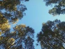 Vista della cima degli alberi fotografie stock