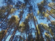 Vista della cima degli alberi fotografie stock libere da diritti