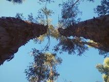 Vista della cima degli alberi immagini stock