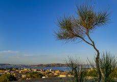 Vista della costa a Palau Olbia, Sardegna, Italia immagine stock