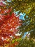 Vista della costruzione di vetro del grattacielo attraverso i rami di albero variopinti Fotografia Stock Libera da Diritti