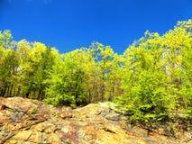 Vista della diga del ruscello del luppolo bella fotografia stock libera da diritti