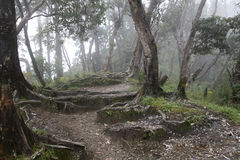 Vista della foresta fotografia stock libera da diritti