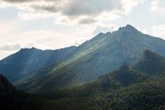 Vista della foresta alpina sul fianco di una montagna nel Kazakistan Fotografie Stock