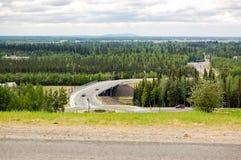 Vista della foresta boreale di Fairbanks Fotografie Stock Libere da Diritti