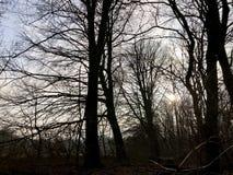 Vista della foresta contro il sole Fotografie Stock