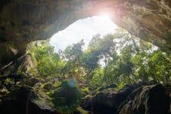 Vista della foresta dalla caverna Fotografia Stock