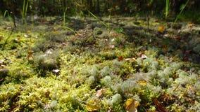 Vista della foresta dell'europeo di autunno archivi video