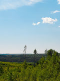 Vista della foresta densa Immagini Stock Libere da Diritti