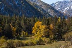 Vista della foresta di autunno di Altay Mountains nella Repubblica di Altai, Russia nave Immagine Stock
