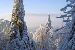 Vista della foresta di conifere di inverno dalla cima della montagna Immagini Stock