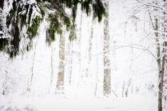 Vista della foresta di inverno Immagini Stock Libere da Diritti
