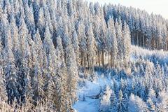 Vista della foresta di inverno con neve Immagine Stock Libera da Diritti