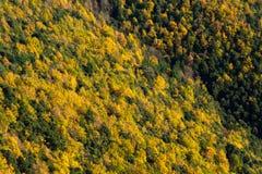 Vista della foresta gialla e verde. Montseny, Spagna. Fotografia Stock