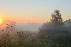 Vista della foresta nebbiosa Fotografie Stock