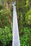 Vista della foresta pluviale Fotografia Stock