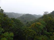 Vista della foresta pluviale Immagini Stock Libere da Diritti