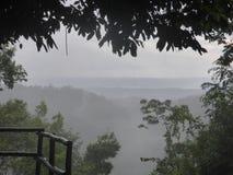 Vista della foresta pluviale Immagine Stock