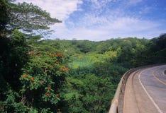 Vista della giungla Fotografia Stock