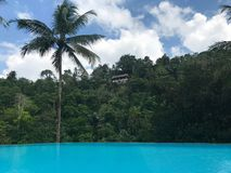 Vista della giungla accanto ad uno stagno Fotografia Stock Libera da Diritti