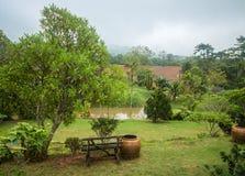 Vista della giungla, Khao Yai, Tailandia Fotografia Stock