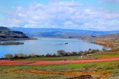 Vista della gola del fiume Columbia Immagine Stock Libera da Diritti