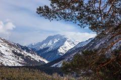 Vista della gola di Baksan e della cresta caucasica principale Rami del pino nella priorità alta fotografia stock libera da diritti