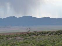 Vista della montagna dell'Utah fotografia stock