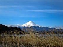 Vista della montagna di Fuji con la cima bianca della neve, fiore FO dell'erba secca Immagini Stock