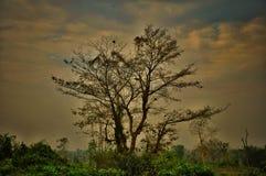 Vista della natura fotografia stock libera da diritti