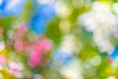 Vista della natura del primo piano della foglia verde sul fondo vago della pianta in giardino con lo spazio della copia usando co fotografia stock libera da diritti
