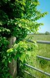 Vista della natura dell'azienda agricola veduta da un'entrata bloccata del portone, come si vede in estate Fotografia Stock