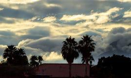vista della nebbia e del cielo blu di mattina del paesaggio con la palma della siluetta dell'albero immagini stock