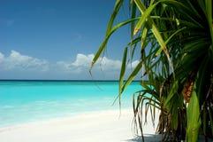 Vista della palma Fotografia Stock