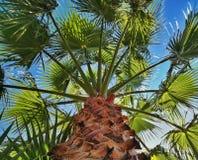Vista della palma con cielo blu fotografie stock