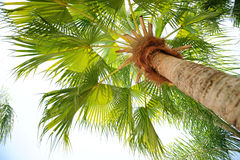 Vista della palma da sotto Fotografia Stock