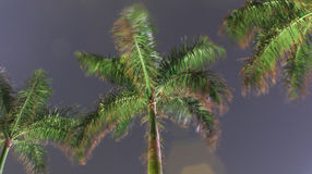Vista della palma di notte fotografia stock