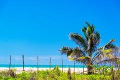 Vista della palma e della spiaggia Fotografia Stock