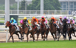 Vista della partita di corsa di cavalli Fotografie Stock Libere da Diritti